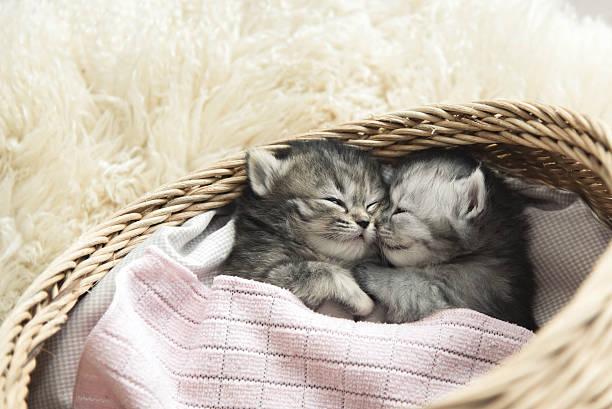 Cute tabby kittens sleeping and hugging picture id480067642?b=1&k=6&m=480067642&s=612x612&w=0&h=l wq5 kmvitejrwgbpsl1t9cjvwmad2nfm49gb6hthk=