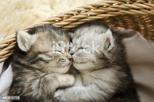 Cute tabby kittens sleeping and hugging in a basket