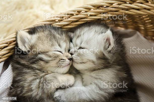 Cute tabby kittens sleeping and hugging picture id480615728?b=1&k=6&m=480615728&s=612x612&h=igmfl4ww9lai685ctxozspmep9atk6obrw0rncmvzks=