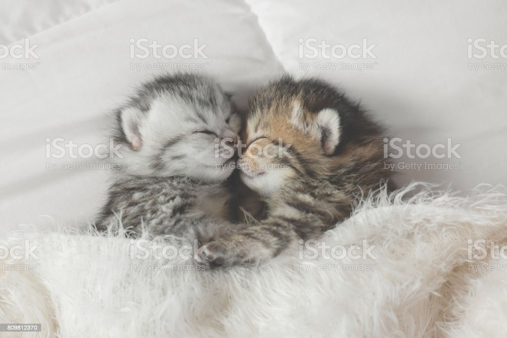 D'adorables chatons tabby et confortable chambre - Photo