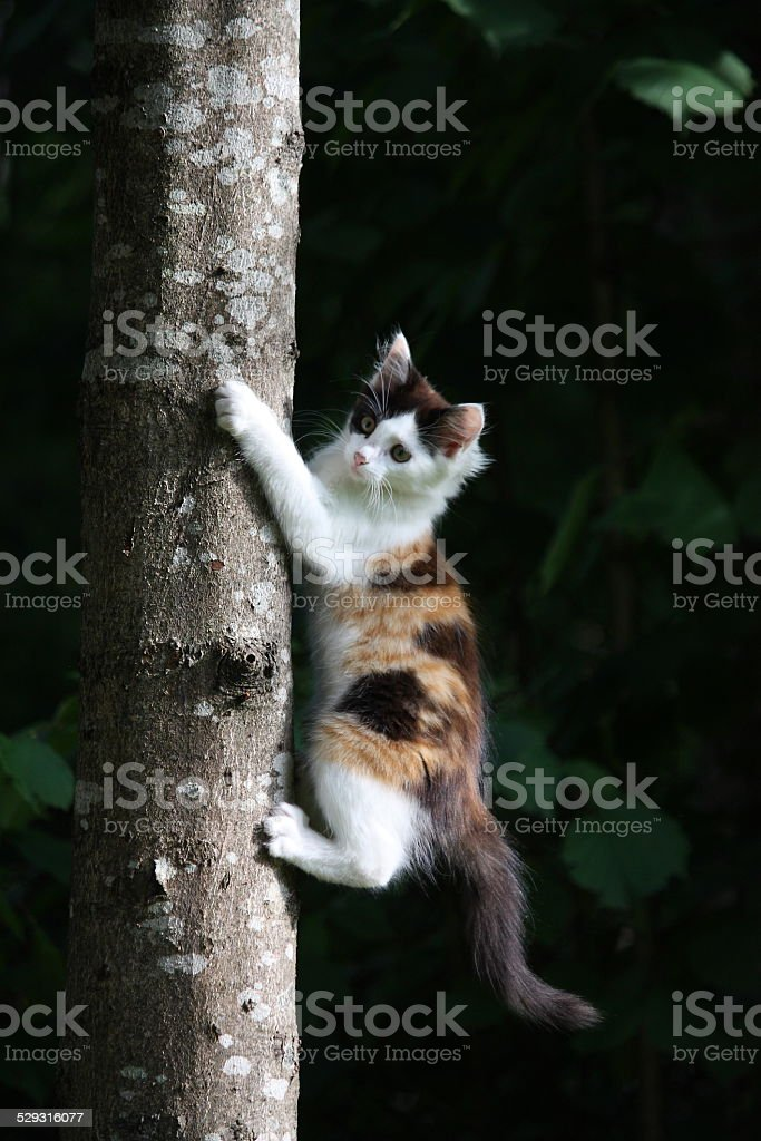 Cute three colored kitten climbing on the tree stock photo
