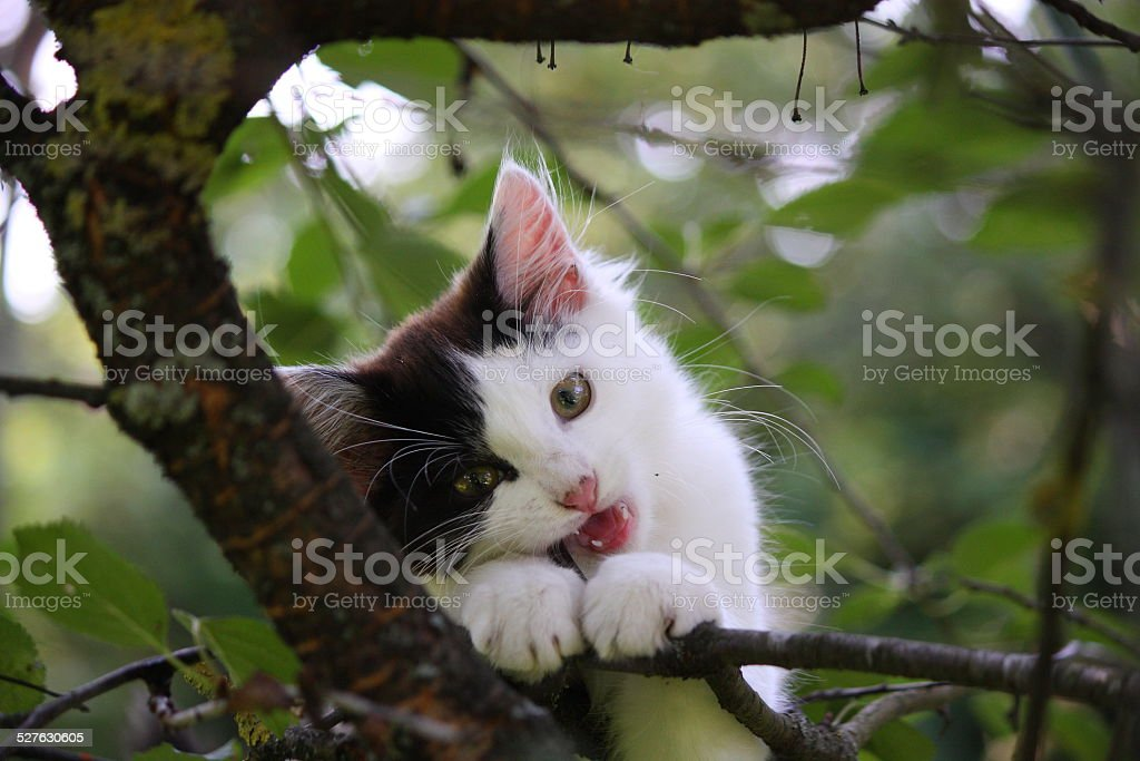 Cute three colored kitten gnawing on tree branch stock photo