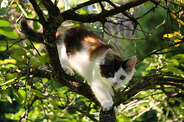 Cute three colored kitten gnawing on tree branch picture id527631171?b=1&k=6&m=527631171&s=612x612&w=0&h=ltkhuahoj2nfmiaqeckq9yve6vsmp762xrxpbnlxpfu=