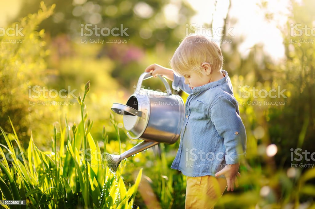 Cute toddler boy watering plants in the garden at summer sunny day stock photo
