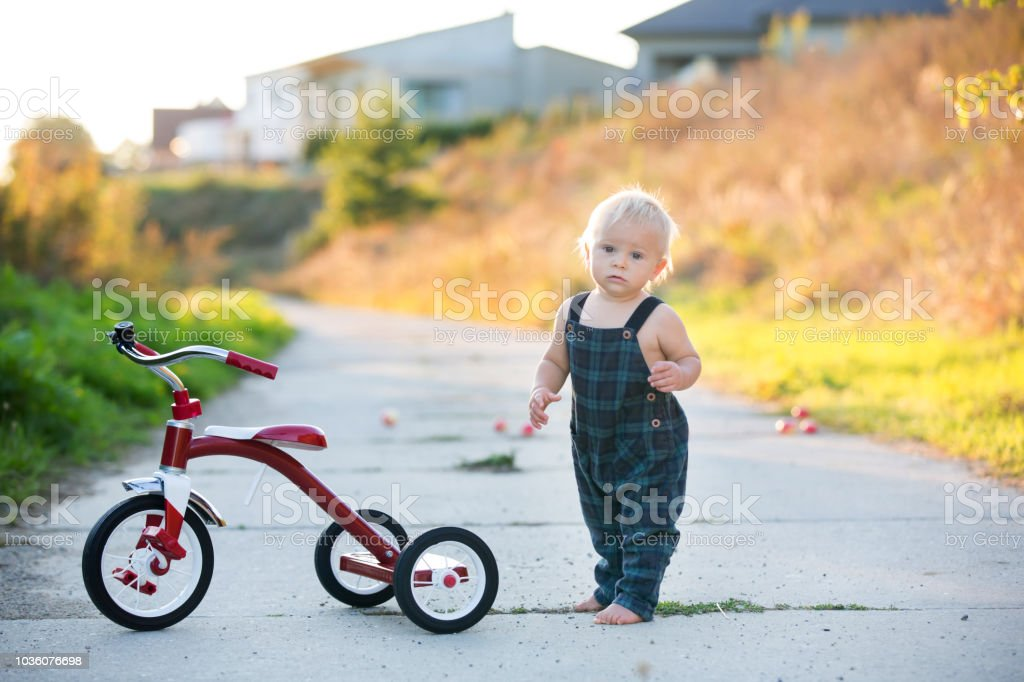 34812fe343f Cute toddler child, boy, playing with tricycle in park, kid riding bike on  sunset - Stock image .
