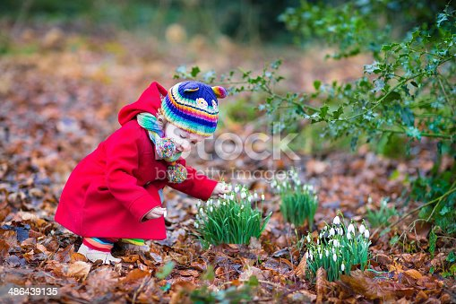 istock Cute toddler girl smelling beautiful snowdrop flowers in spring park 486439135