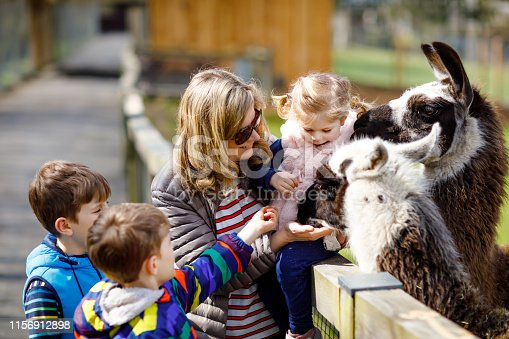 Cute toddler girl, two little school kids boys and young mother feeding lama and alpaca on a kids farm. Three children petting animals in the zoo. Woman with sons, daughter together on family weekend.
