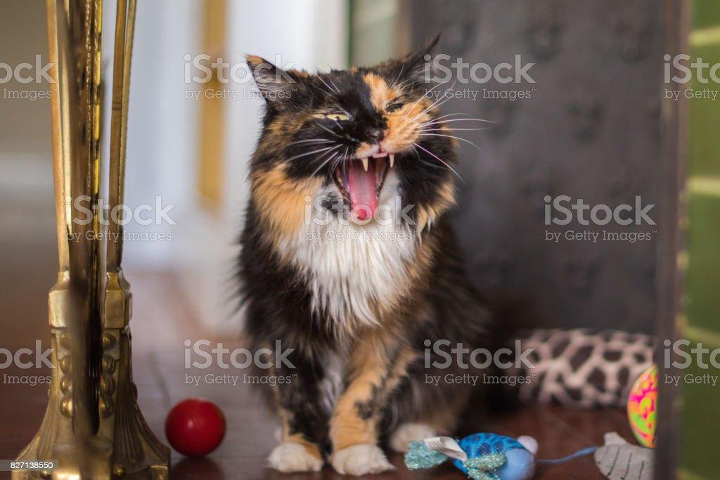 Cute tortoiseshell cat in a beautiful home stock photo