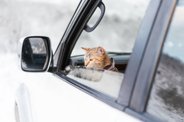 Cute traveler cat looking out of the car in winter picture id1194533909?b=1&k=6&m=1194533909&s=612x612&w=0&h=noplp2 cytw3x c841vjvf2ohuosfuxyoshndcnuzes=