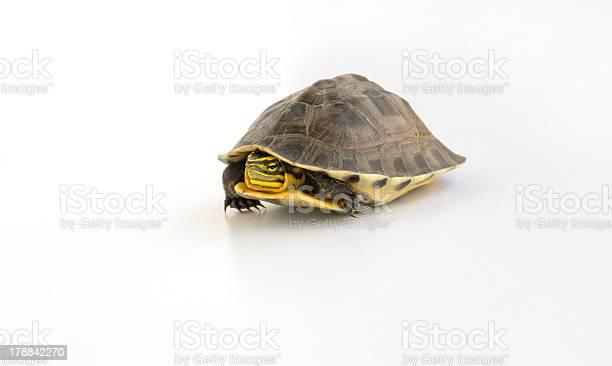 Cute turtle picture id178842270?b=1&k=6&m=178842270&s=612x612&h=oseykencxnnjxnxurblkfpse8l33xpsztesbelgaaxw=