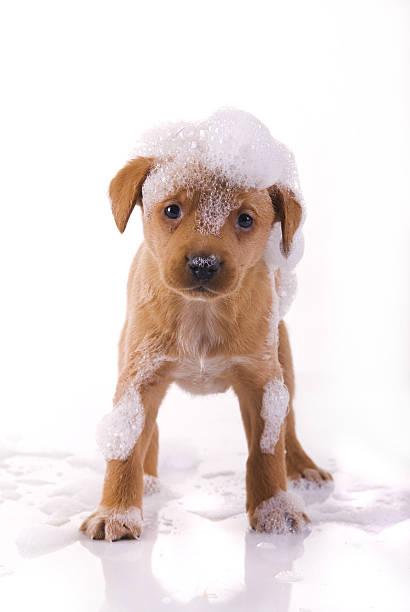 cute, wet puppy stock photo