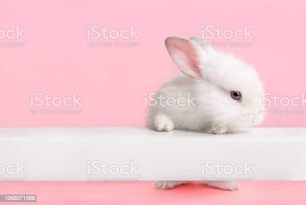Cute white bunny rabbit looking at you picture id1068071566?b=1&k=6&m=1068071566&s=612x612&h=poakapuzxf8r67gbu zpwzrrmgn3l7ru8ns44hzx5ga=