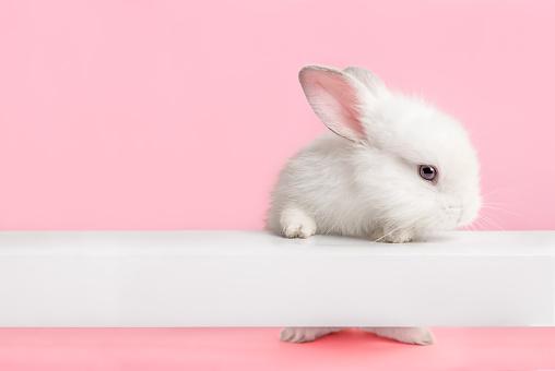 可愛的白色兔子看著你 照片檔及更多 一隻動物 照片