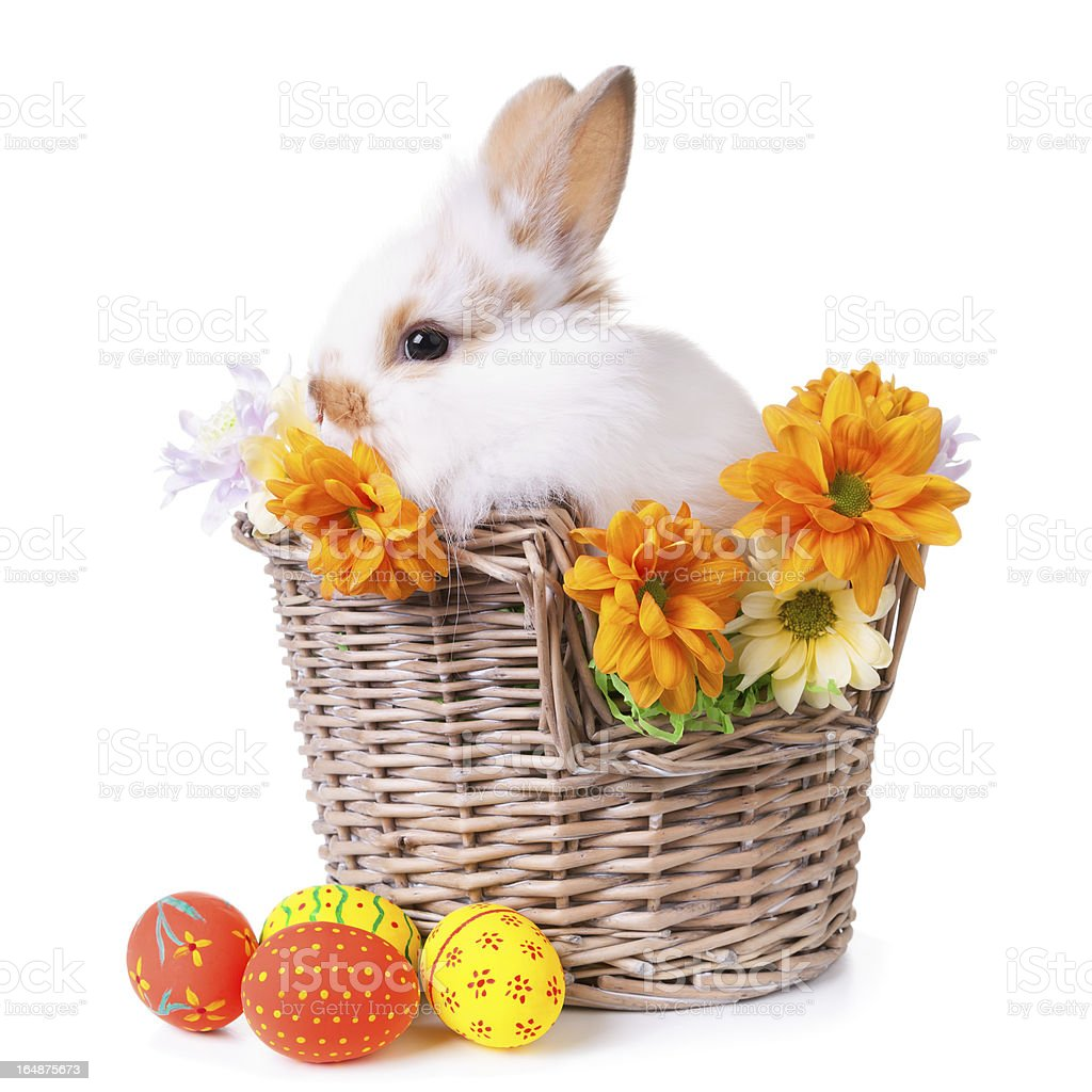 Cute white bunny sitting  in a basket royalty-free stock photo