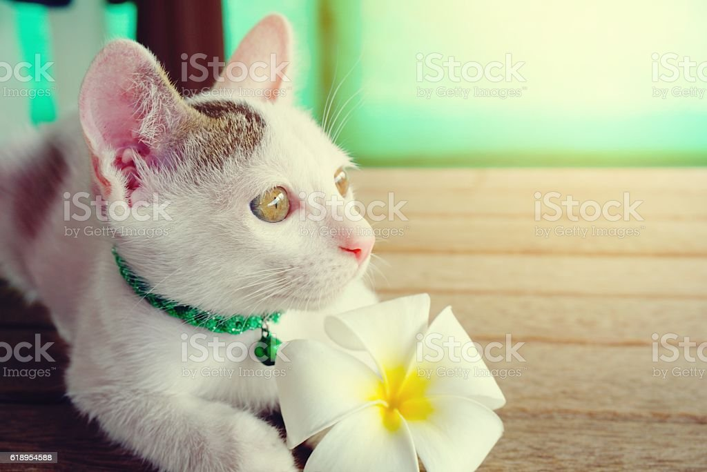 cute white cat and flower closeup stock photo