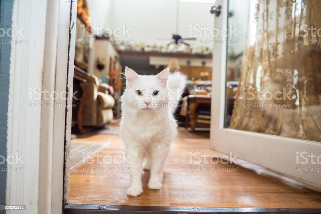 Cute white cat indoors stock photo