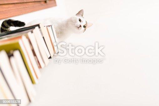 istock Cute white cat loves books 939615328