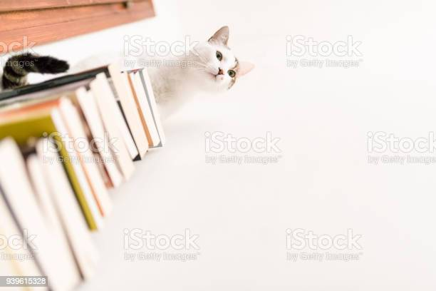 Cute white cat loves books picture id939615328?b=1&k=6&m=939615328&s=612x612&h=kkeu0uv7ndza62a2icjjulmty h 0p  siz tfmgghk=