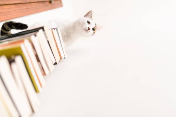 süße weiße katze liebt bücher - humor bücher stock-fotos und bilder