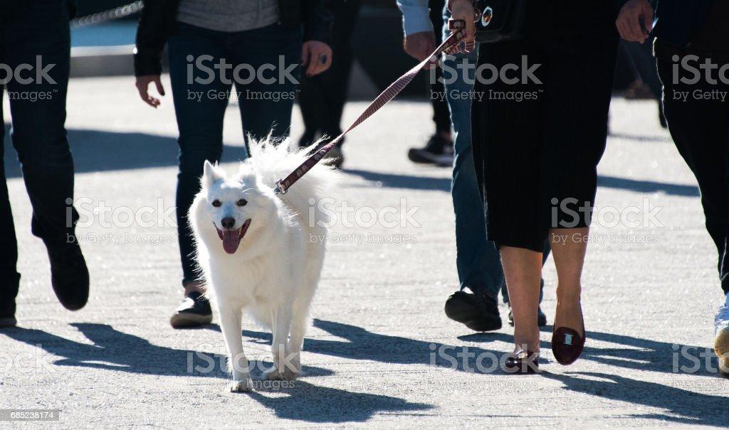 Cute white dog foto de stock royalty-free