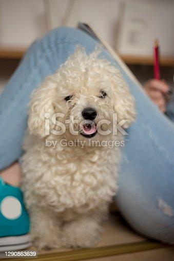 female legs sitting near small dog