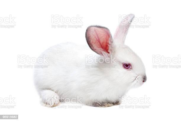 Cute white isolated baby rabbit picture id95915682?b=1&k=6&m=95915682&s=612x612&h=4vh7jwg6lkouuhbrluuyaviqofryvesjmrgg48o6oec=