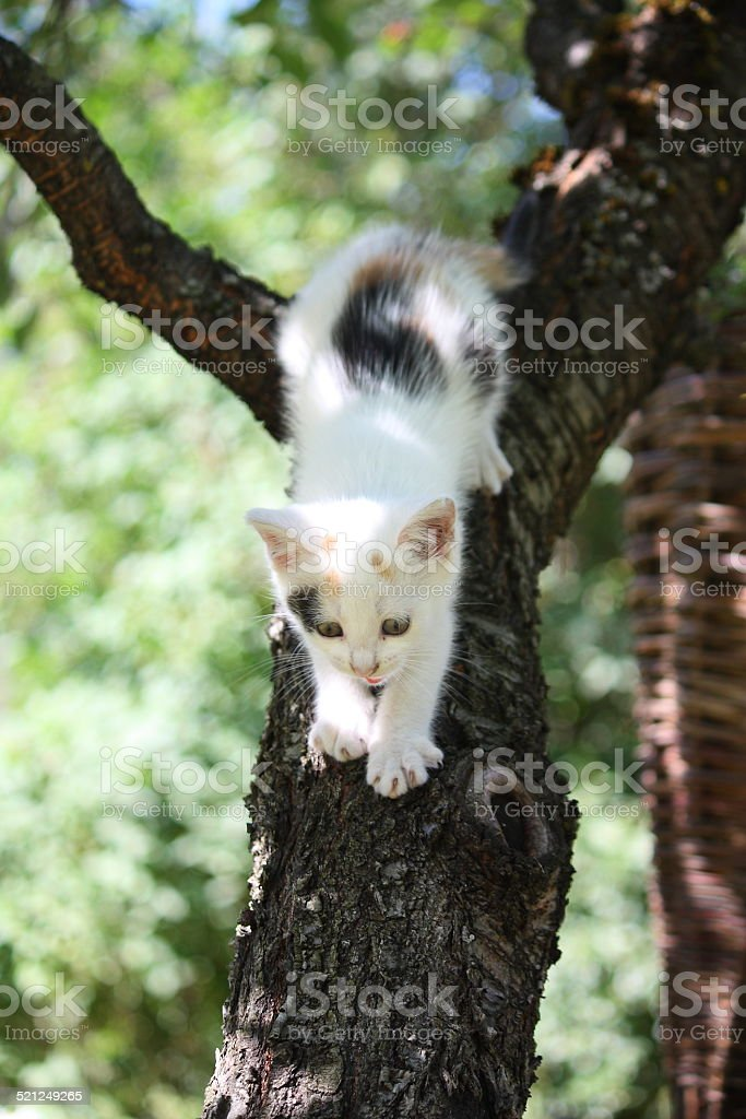 Cute white kitten climbing down from the tree stock photo