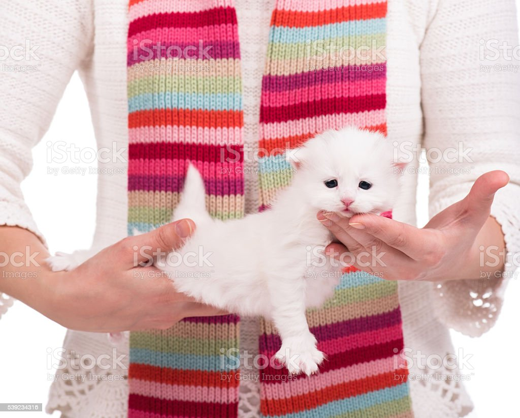 Linda mascota blanco foto de stock libre de derechos