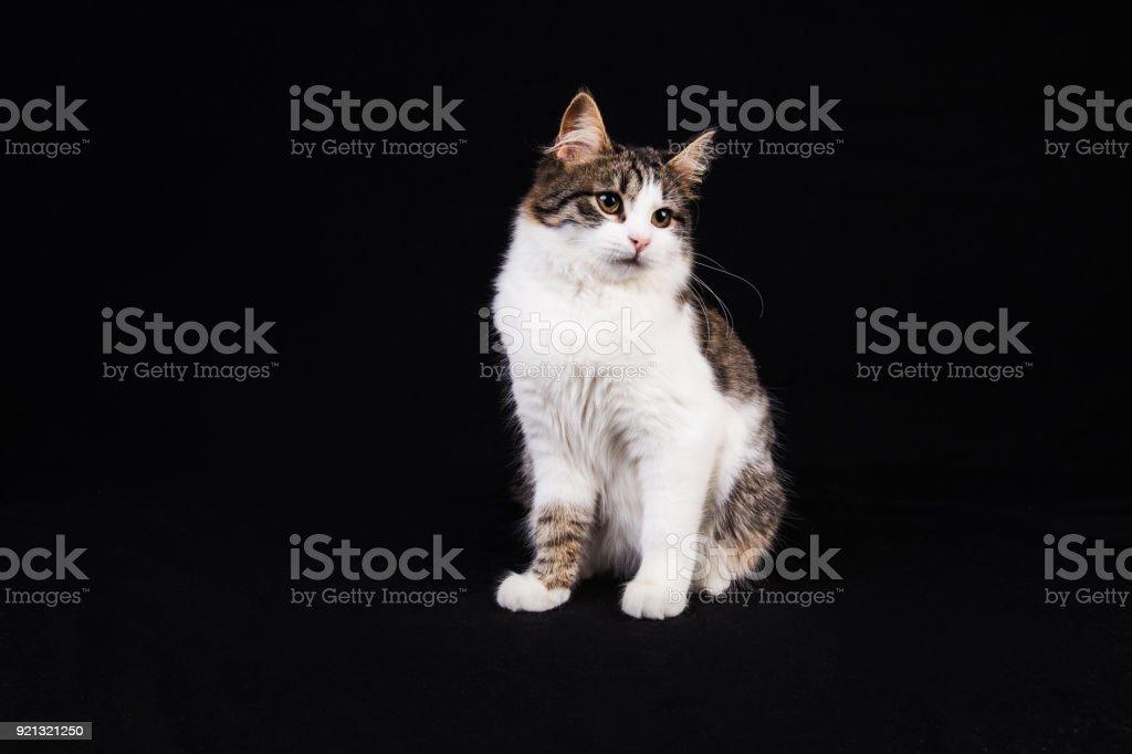 Cute white kitten stock photo