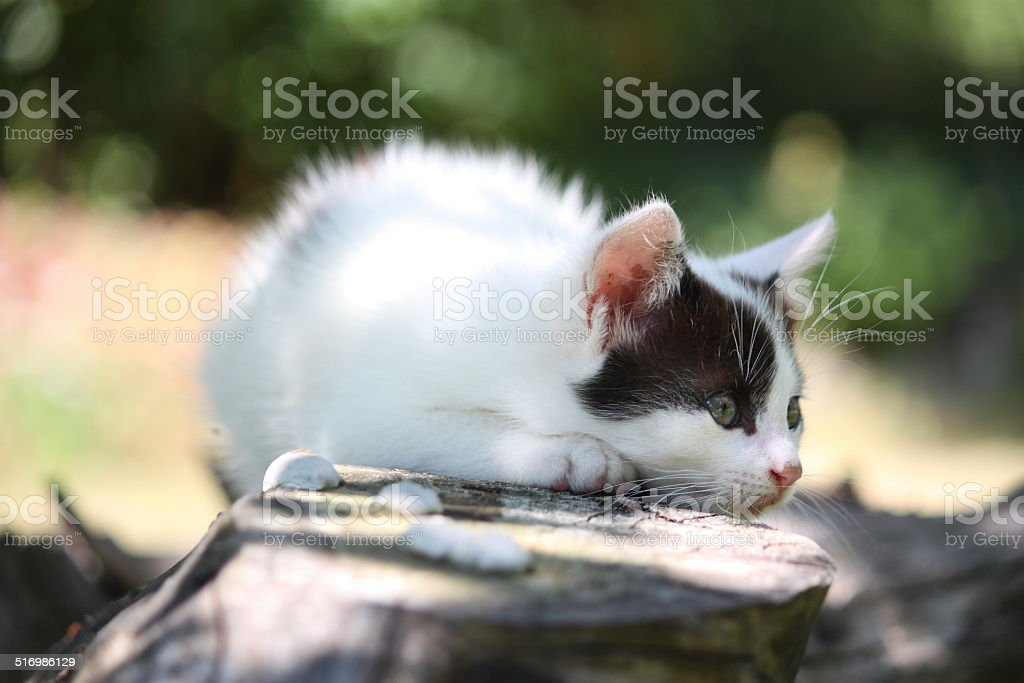 Cute white kitten resting on the tree branch stock photo