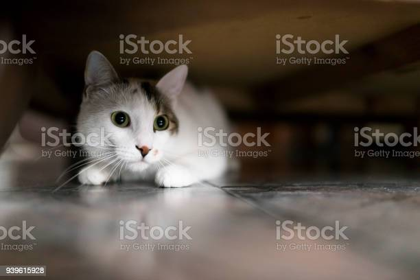 Cute white kitten under the bed picture id939615928?b=1&k=6&m=939615928&s=612x612&h=pg7vkcpqtdrvczc8crplw92gbjxtmpfniqy7e5i kwa=