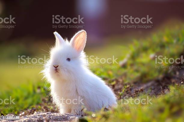 Cute white little rabbit peeking out of hole picture id513385146?b=1&k=6&m=513385146&s=612x612&h=fp 0915ljda0zf3y5r9zuquhekznkepxw4diseg9t20=