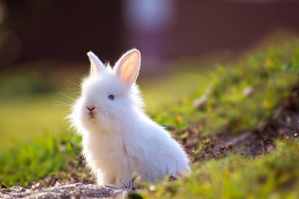 Joli petit lapin blanc qui dépasse au niveau du trou. - Photo
