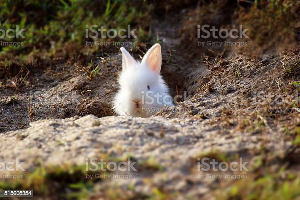 Cute white little rabbit peeking out of hole picture id515605354?b=1&k=6&m=515605354&s=612x612&h=buhtzadp6wfxin2sjoyhom4ekkaybbbtqx5tmctap a=