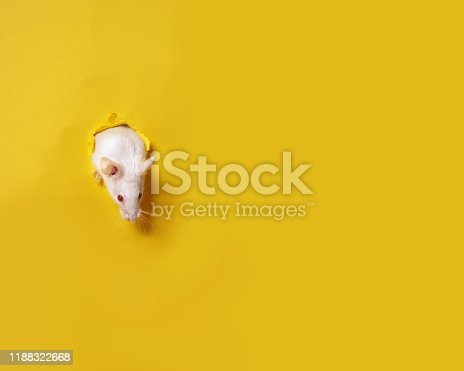 istock Cute white mouse on yellow background . Mouse is symbol of the new year 2020 in the Chinese calendar. New year and Christmas concept. 1188322668