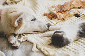istock Cute white puppy lying with little kitten on soft bed in autumn leaves. Adoption concept. Dog and kitty relaxing on cozy blanket, furry friends. 1271172657
