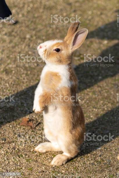 Cute wild rabbits picture id1127026702?b=1&k=6&m=1127026702&s=612x612&h=wk044yzxfu2aspcg3f0i1qkloxlze08kppumslhvvns=
