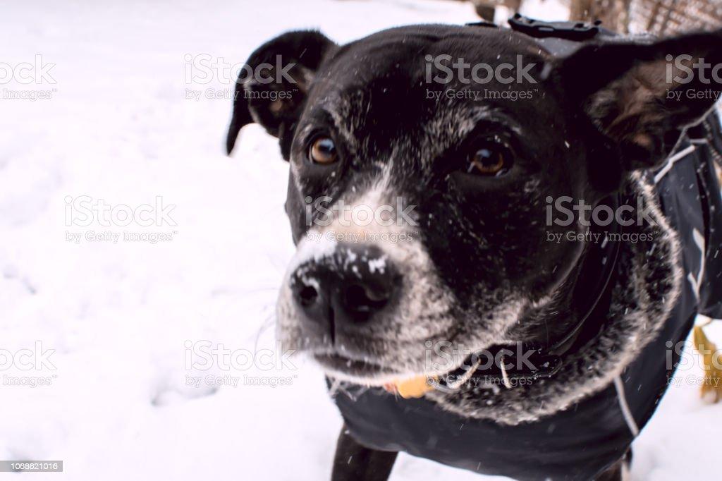 Cute winter dog in snow selfie portrait stock photo