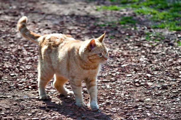 Lindo gato amarillo - foto de stock