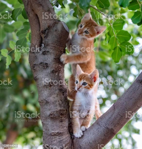 Cute yellow kittens picture id1026144042?b=1&k=6&m=1026144042&s=612x612&h=qya8efnas2tlw8354ellu6e1kbcvueb7c8 hubffuvq=