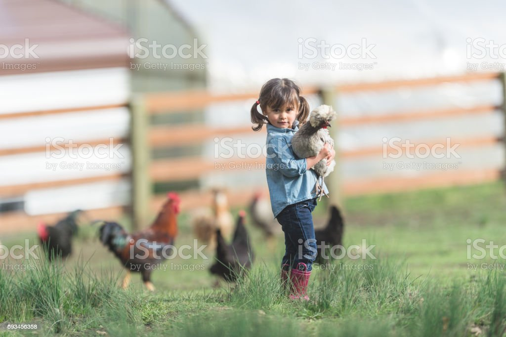Cute young ethnic girl walks around family farm carrying a live chicken stock photo