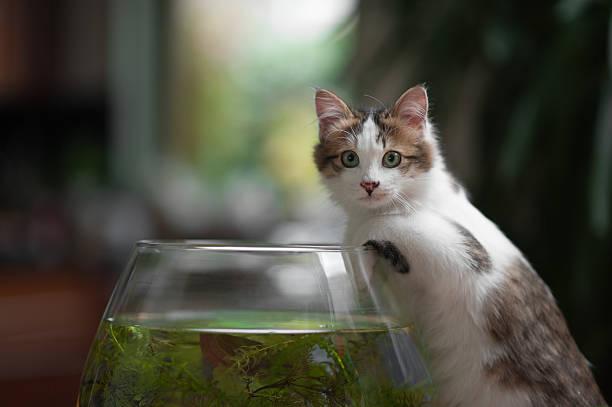 Niedliche kleine Kätzchen und fish bowl – Foto