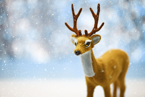 Cute Young Reindeer on a Defocused Winter Landscape Background
