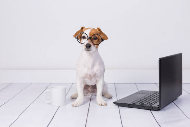 cute young small dog sitting on the floor and working on laptop. Wearing glasses and cup of tea or coffee besides him. Pets indoors stock photo
