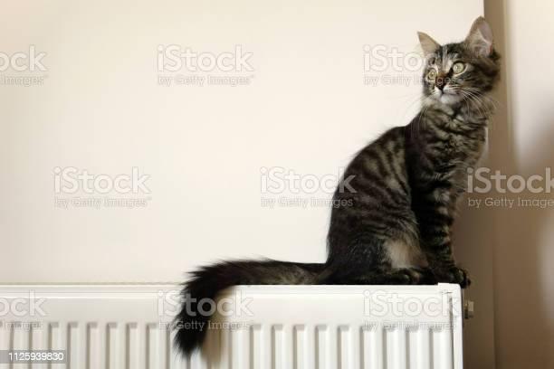 Cute young tabby cat sitting picture id1125939830?b=1&k=6&m=1125939830&s=612x612&h=ezdjesguvkgjglhd2qainwkpahvmbbuqqyfqthxhxc4=