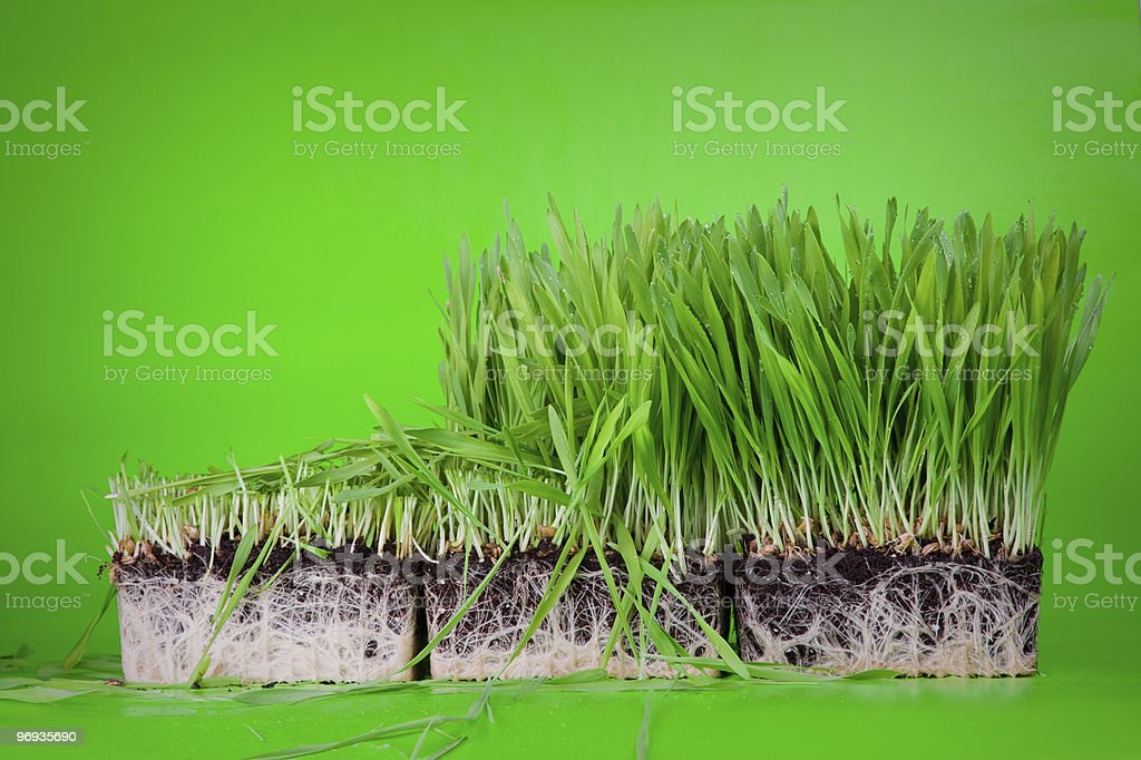 Cuted grass royalty-free stock photo