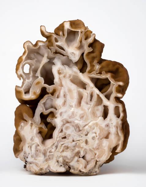 Geschnittener Pilz morel auf weißem Hintergrund. – Foto