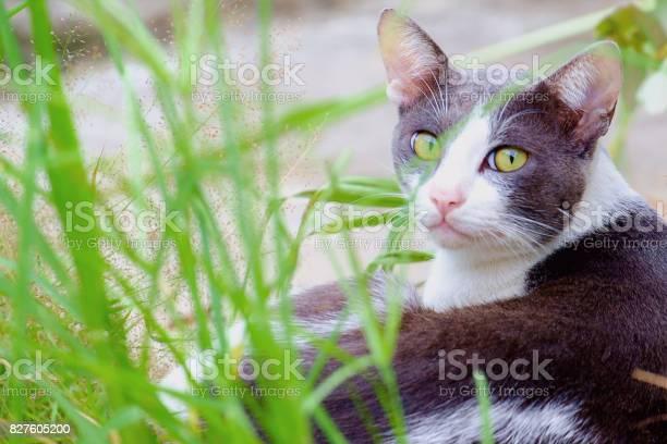 Cutely cat lying in the green grass picture id827605200?b=1&k=6&m=827605200&s=612x612&h=cifwc6i zlfkxvzvp2x3nznvagsk1tstkrd0f9m2oau=