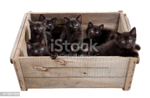 istock Cuteness Overload - Seven Kittens in a Box 477957009