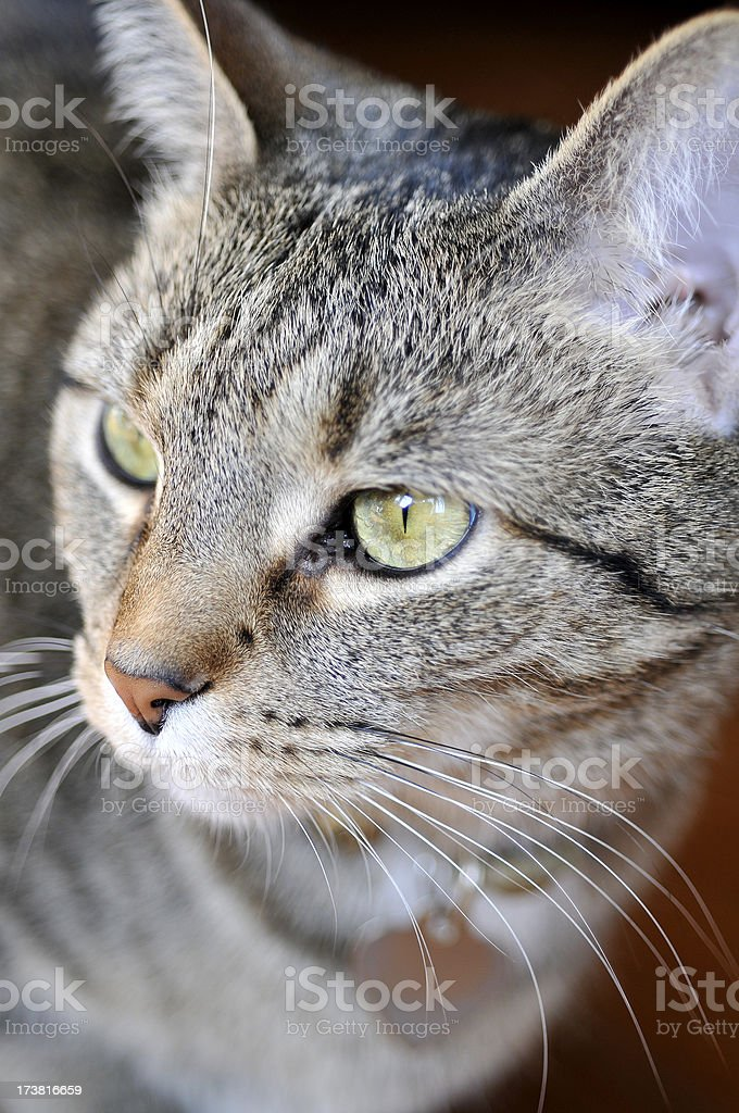 Cutey Cat stock photo